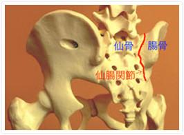 「仙腸関節」の画像検索結果